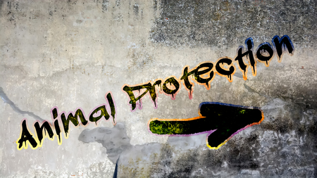 Wall Graffiti the Direction Way to Animal Protection 스톡 콘텐츠