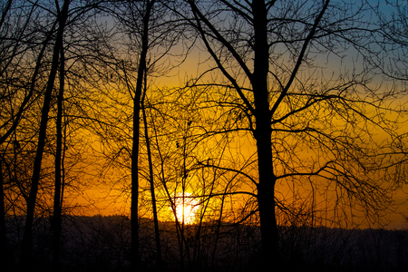 Glowing sunset in trees Stockfoto - 114655216