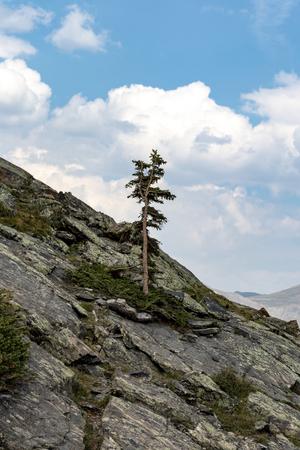 Solo mountain tree Stok Fotoğraf