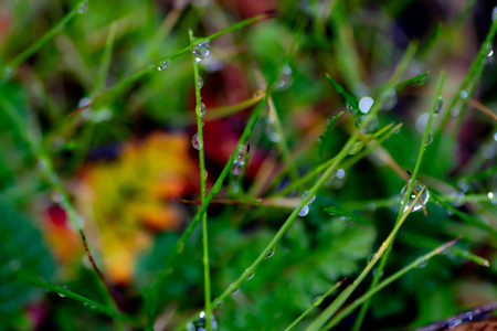 Abstract grass with rain drops