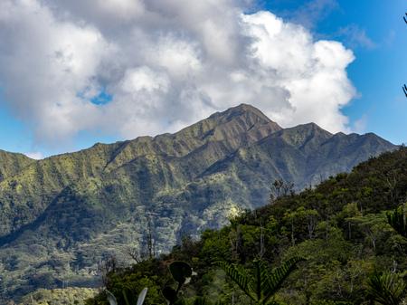 Hawaiian Green Jungle Mountain