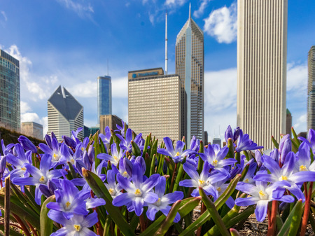 Early Spring in Chicago