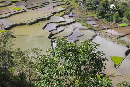 gradas: Las terrazas de arroz de Banaue, North Luzon, Filipinas