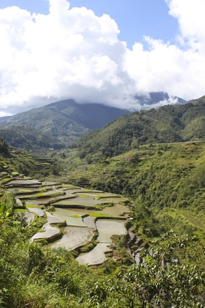Rice terraces of Banaue, North Luzon, Philippines photo