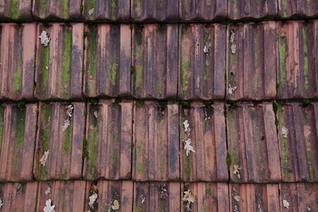 moos: Roofing tile red with moos Background Wallpaper Stock Photo