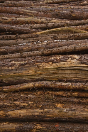 stack of wood photo