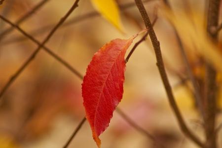 remuneraciones: hojas rojas en oto�o