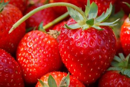 strawberry: fresh strawberries closeup