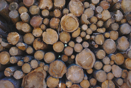 logging, natural stacked uneven wooden logs Stock fotó