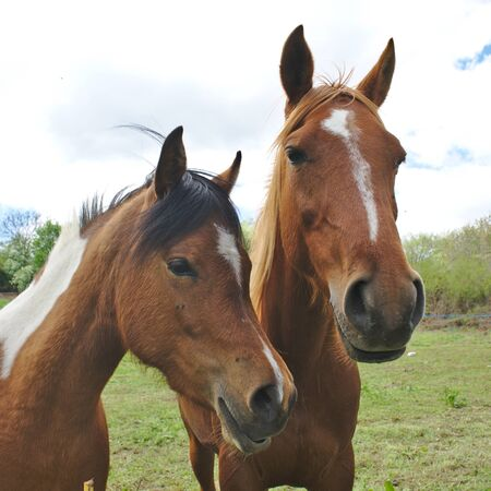 mares heads and her foal.