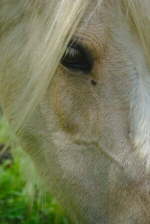 white horse mane look and mane close up