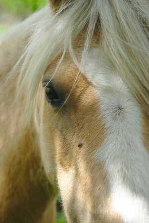 horse look at the white mane Фото со стока