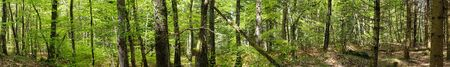 360 degree panoramic shot in the forest