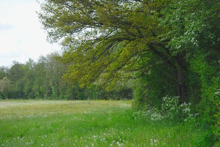 tree and meadow in spring in Auvergne, Olby, Puy-de-Dome. Stock Photo