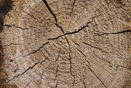 raw logs texture. material, background.