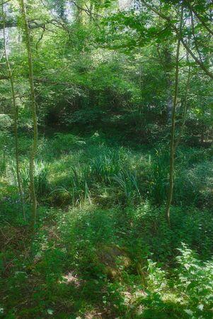 forest landscape at Lake Aydat. Auvergne, puy-de-dome 写真素材