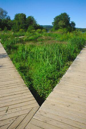 walkway in the wetland of Lake Aydat, Auvergne, Puy-de-Dome