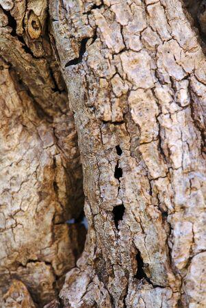 close-up dry bark texture, macro photography Stock Photo