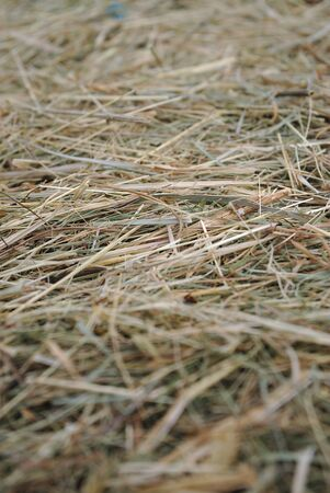 close-up shot of a hay bale, perspective and bokeh effect