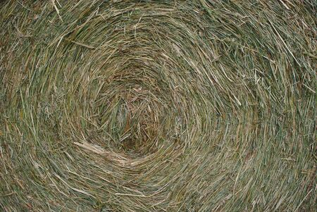close-up shot of the center of a bale of hay. Spiral. 版權商用圖片 - 124989425