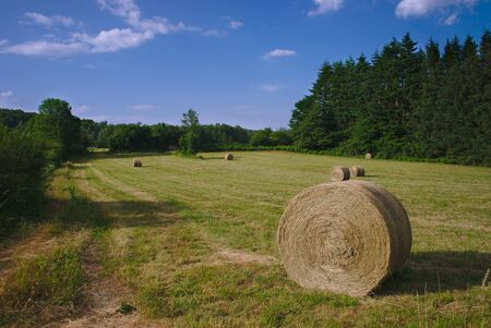 Cylindrical hay bales in spring meadows in Auvergne, Auvergne, Puy-de-Dome 版權商用圖片