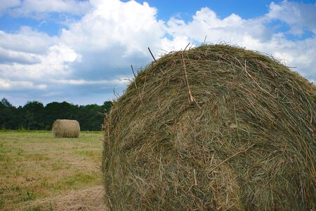 Cylindrical hay bales in spring meadows in Auvergne, Auvergne, Puy-de-Dome 版權商用圖片 - 124989447