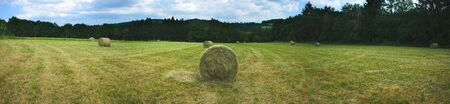 Panoramic shooting, cylindrical hay bales in the meadows in spring in Auvergne, Puy-de-Dome