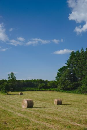 Cylindrical hay bales in spring meadows in Auvergne, Auvergne, Puy-de-Dome 版權商用圖片 - 124989450