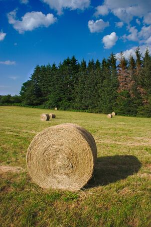 Cylindrical hay bales in spring meadows in Auvergne, Auvergne, Puy-de-Dome 版權商用圖片 - 124989506