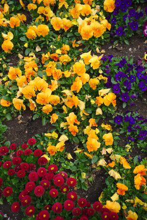 Parterre of colorful flowers, Lecoq garden in Clermont-Ferrand Standard-Bild - 124990095