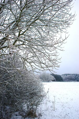 Campaign snowy in Auvergne near Clermont Ferrand. Trees and branches in the foreground 写真素材