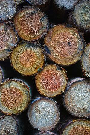 stacked wood logs, front view in close-up
