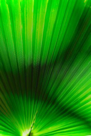green palm leaf illuminated in close up Banco de Imagens