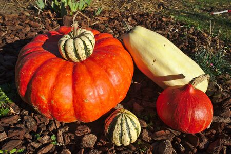 different forms of freshly picked garden squash Banco de Imagens