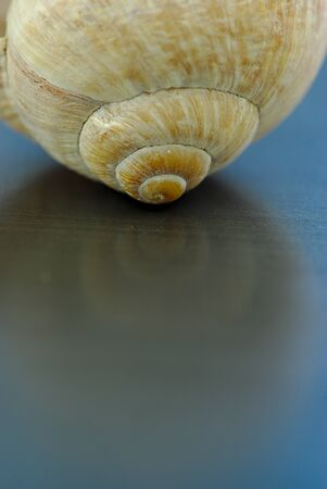 convolutions of a snail shell in close-up; spiral