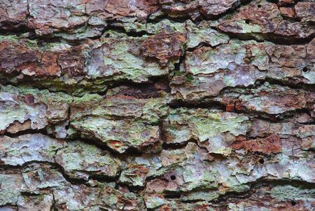 Close-up pine bark texture in brown and green tones 写真素材