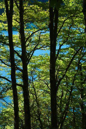 undergrowth and bright green foliage, Lake Pavin, Auvergne