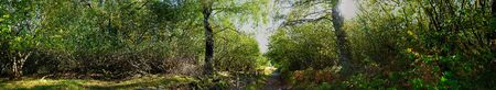 panoramic shot in forest, Auvergne, Puy de Dome.