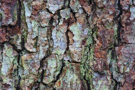Close-up pine bark texture in brown and green tones Imagens