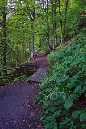 forest walk path in Auvergne, Pavin lake