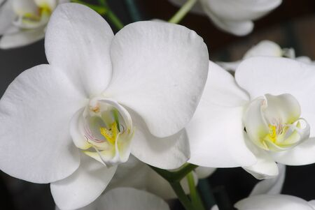 white orchid flower on branch