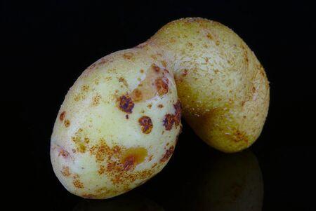 deformed organic potato in macro, on black background