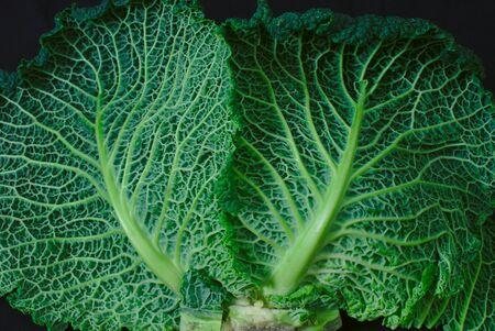 veins and texture of green cabbage leaves, food