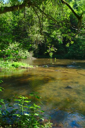 view of the Sioule river (Puy-de-Dome, Auvergne, France) in summer flows between the trees