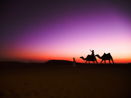 Sunset camels riding in Abu Dhabis desert Stock Photo