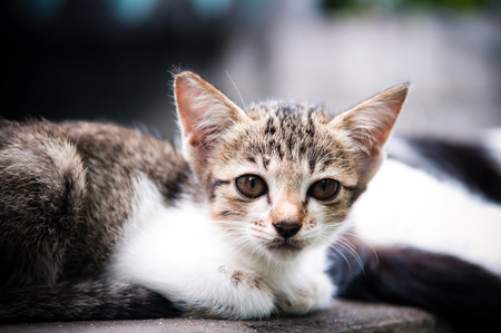Homeless kittens in Bangkok. Street cat problem. Stock Photo