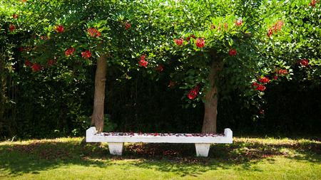 봄 나무, Jogashima 공원, 미우라, 일본 공원에서 벤치 스톡 콘텐츠
