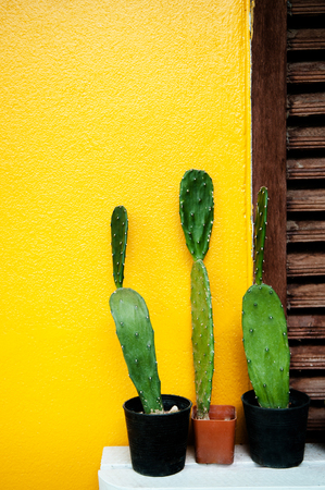 Cactus in small plant pot on yellowconcrete  wall background