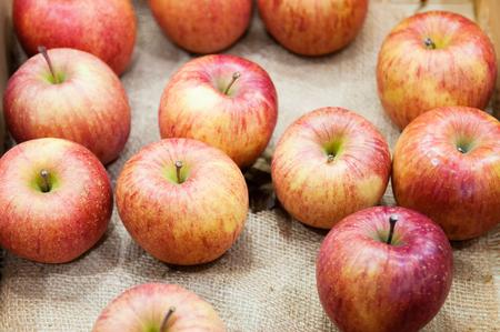 Fresh reddish pink Aomori Fuji apples on sackcloth, winter fruit of Tohoku. Japan
