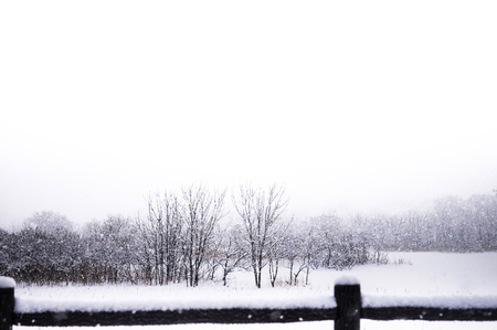 冬、東北、日本の青森の風景が白い雪に覆われています。